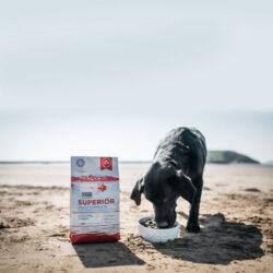 Karma dla psa Fish4Dogs Superior Adult Complete z Łososia