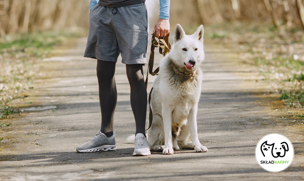 Spacer z psem - Skład Karmy